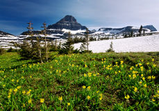 Wildflowers de source en stationnement national de glacier photographie stock libre de droits