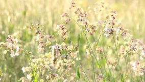 Wildflowers in de wind stock footage
