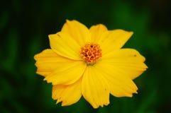 Wildflowers in de wind royalty-vrije stock fotografie