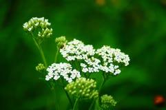 Wildflowers in de wind stock afbeeldingen