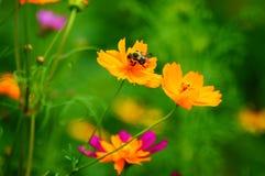 Wildflowers in de Wind met Bumble Bij royalty-vrije stock afbeeldingen