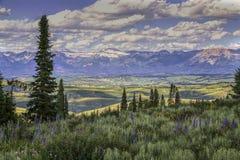 Wildflowers de Wyoming del primero plano y montañas del diente de sierra fotos de archivo