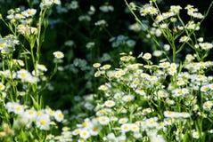 Wildflowers in de zon stock afbeelding