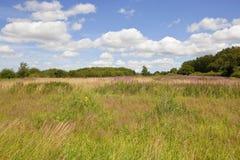 Wildflowers dei wolds di Yorkshire nell'estate Fotografia Stock Libera da Diritti