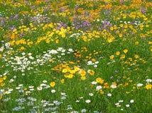 Wildflowers del bordo della strada Fotografie Stock Libere da Diritti