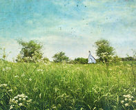 Wildflowers del cordón de la reina anne Foto de archivo libre de regalías