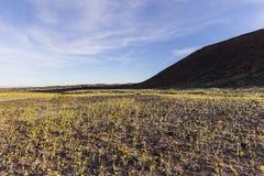 Wildflowers del deserto del Mojave sotto il cratere di Amboy Fotografia Stock Libera da Diritti