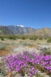Wildflowers del desierto Fotos de archivo libres de regalías