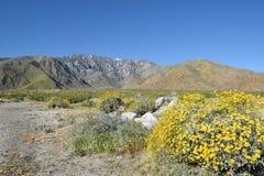 Wildflowers del desierto Fotos de archivo