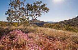 Wildflowers del desierto de la tarde Foto de archivo libre de regalías