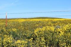Wildflowers del filo spinato Fotografie Stock