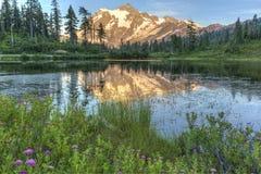 Wildflowers del lago picture y Mt Shuksan fotos de archivo