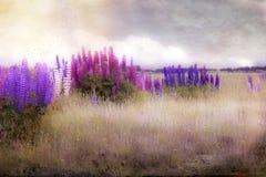 Wildflowers del lupino nel campo Fotografie Stock