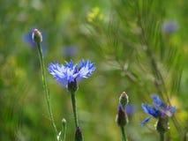 Wildflowers del prado Fotografía de archivo libre de regalías