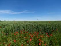 Wildflowers del prado Imagen de archivo libre de regalías