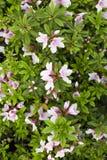 Wildflowers del verano Imagen de archivo