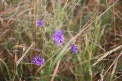 Wildflowers delicados no campo fotos de stock royalty free