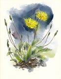 Wildflowers dell'acquerello Fotografia Stock Libera da Diritti