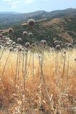 Wildflowers dell'aglio Immagini Stock