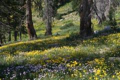 Wildflowers della montagna Immagini Stock