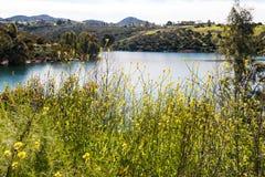 Wildflowers della primavera nel lago Jennings in Lakeside, California immagini stock