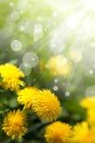 Wildflowers della sorgente Immagini Stock Libere da Diritti
