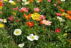 Wildflowers della sorgente Fotografie Stock