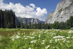Wildflowers della sorgente in valle del Yosemite Fotografia Stock