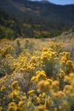 Wildflowers della vetta Fotografia Stock Libera da Diritti