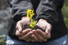Wildflowers in den Händen Lizenzfreies Stockbild