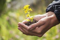Wildflowers in den Händen Stockbilder
