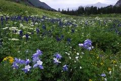 Wildflowers in den San- Juanbergen in Kolorado Lizenzfreie Stockfotografie