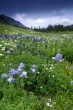 Wildflowers in den San- Juanbergen in Kolorado Stockfotos
