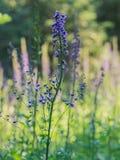 Wildflowers in der Blüte Lizenzfreie Stockfotografie