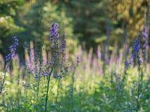 Wildflowers in der Blüte Lizenzfreie Stockbilder