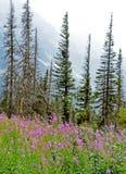 Wildflowers in der Blüte gegen einen schneebedeckten Berg Lizenzfreie Stockbilder