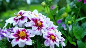 Wildflowers der drei Farben, des Weiß, des Rosas und des Gelbs Lizenzfreie Stockfotografie