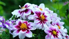 Wildflowers der drei Farben, des Weiß, des Rosas und des Gelbs Lizenzfreie Stockfotos