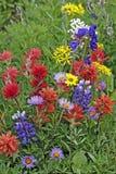 Wildflowers in der Wiese Stockfotografie