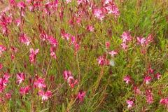 Wildflowers di estate Fotografia Stock Libera da Diritti