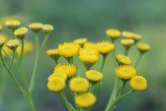 Wildflowers di estate Immagine Stock Libera da Diritti