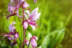 Wildflowers di estate - fiori del fleld Fotografia Stock