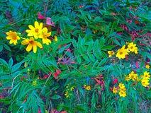 Wildflowers di fine dell'estate Fotografie Stock Libere da Diritti