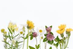 Wildflowers di fioritura Fotografie Stock Libere da Diritti