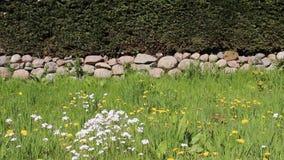Wildflowers di fioritura del fiore con le pareti di pietra ed i recinti dell'albero video d archivio