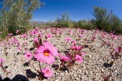Wildflowers di Fucia fotografie stock