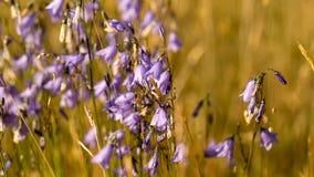 Wildflowers di mattina Fotografia Stock Libera da Diritti