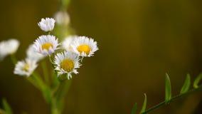 Wildflowers di mattina Fotografie Stock Libere da Diritti