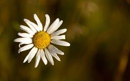 Wildflowers di mattina Immagini Stock