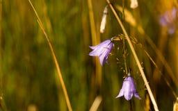 Wildflowers di mattina Fotografia Stock